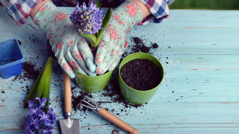 Woman Gardening Planting Flowers In Pot Backyard