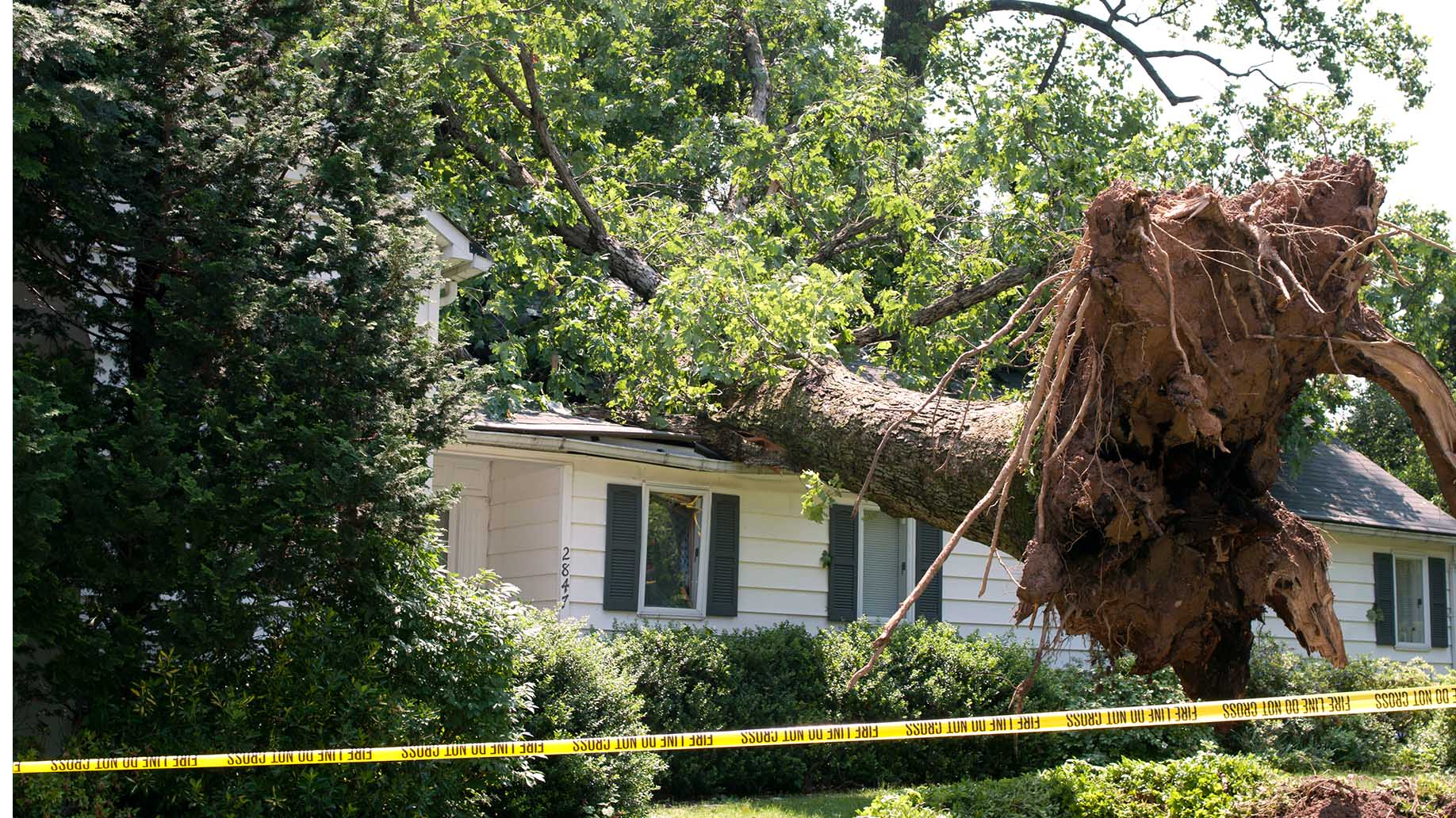 Uprooted Tree Fell On House After