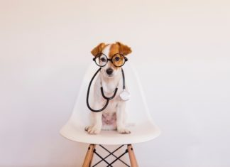 Portrait Of Dog In Glasses With Stethoscope