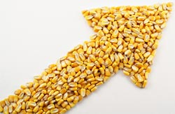 food prices increasing corn kernels