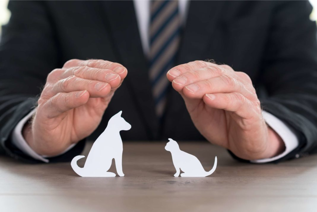 Insurer Protecting Pets With His Hands Dog Cat