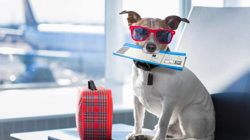 Pets Flight Guidelines