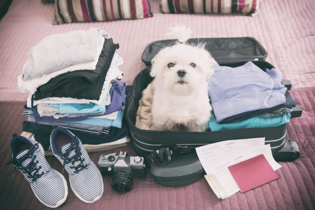Traveling With Pets Airlines