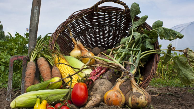 8 Ways to Buy Natural Organic Food on a Budget