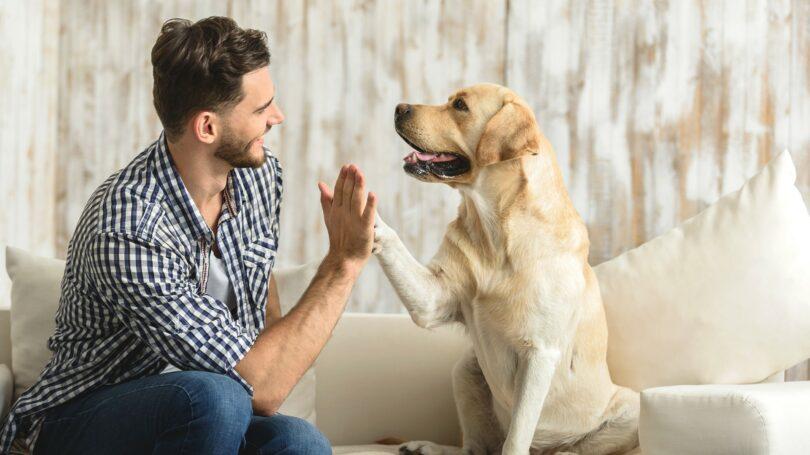 Pets Problem Probate