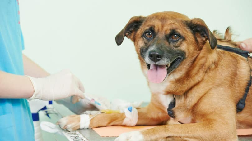 Pet Health Insurance Policy Dogs