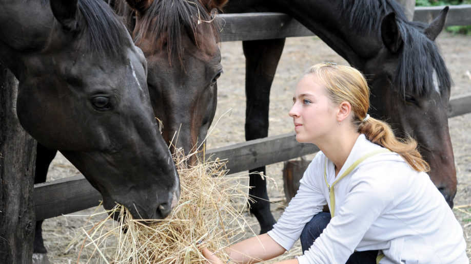 How To Cut Costs of Horse Ownership