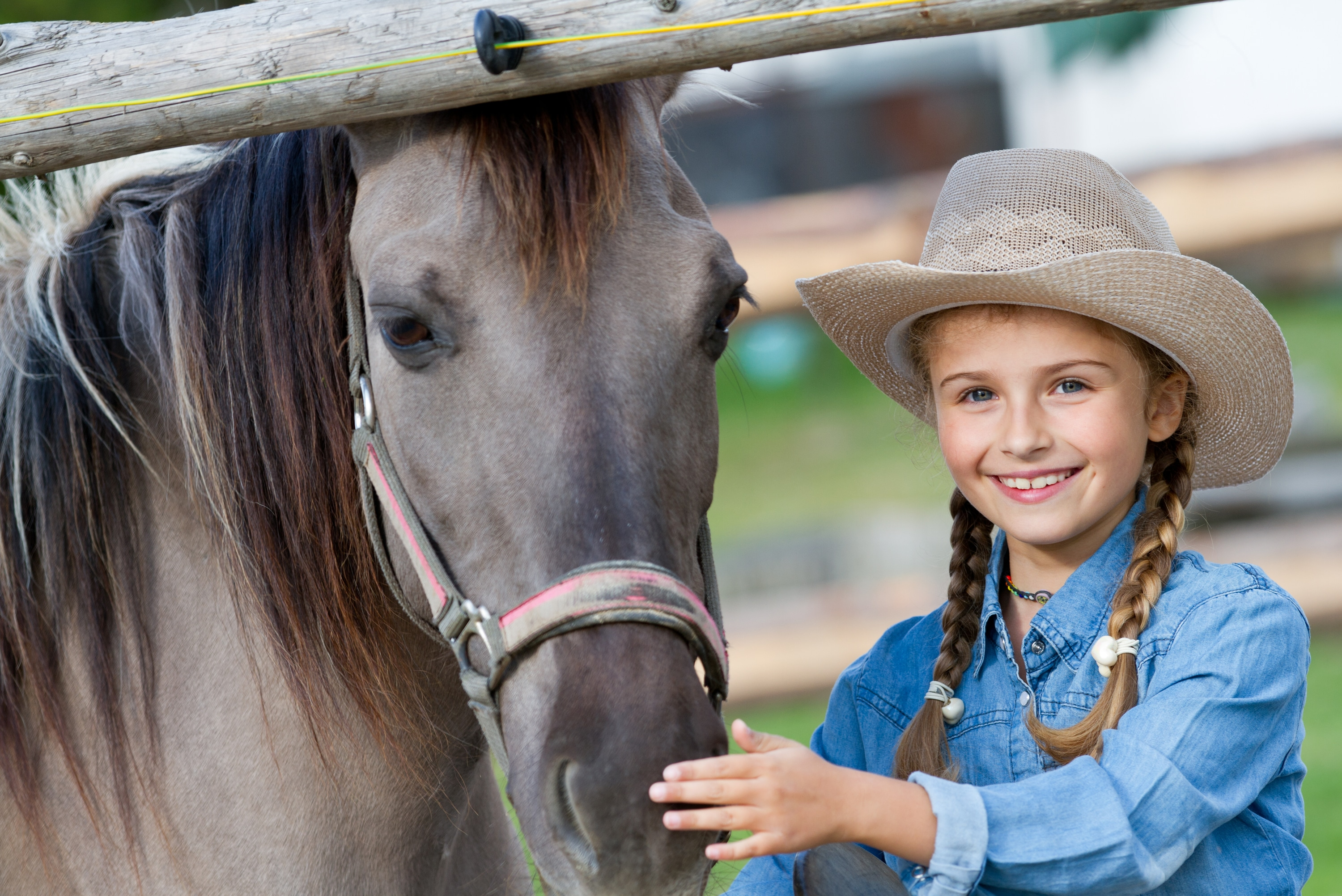 Annual Cost of Owning a Horse and 6 Alternatives to Buying