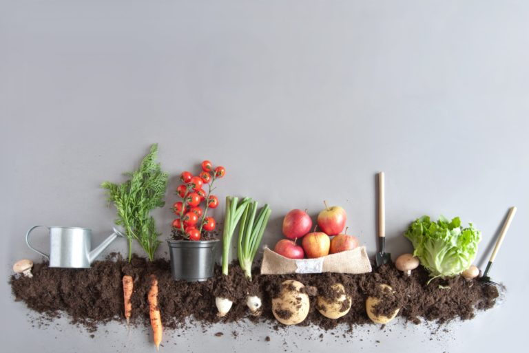Composting Organic Fruits Vegetables To Regrow Dirty Soil Fertilizer