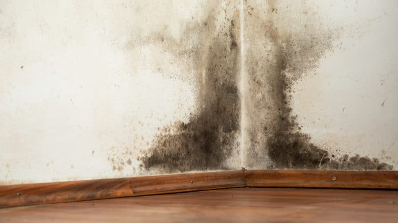 Mold Mildew Damage