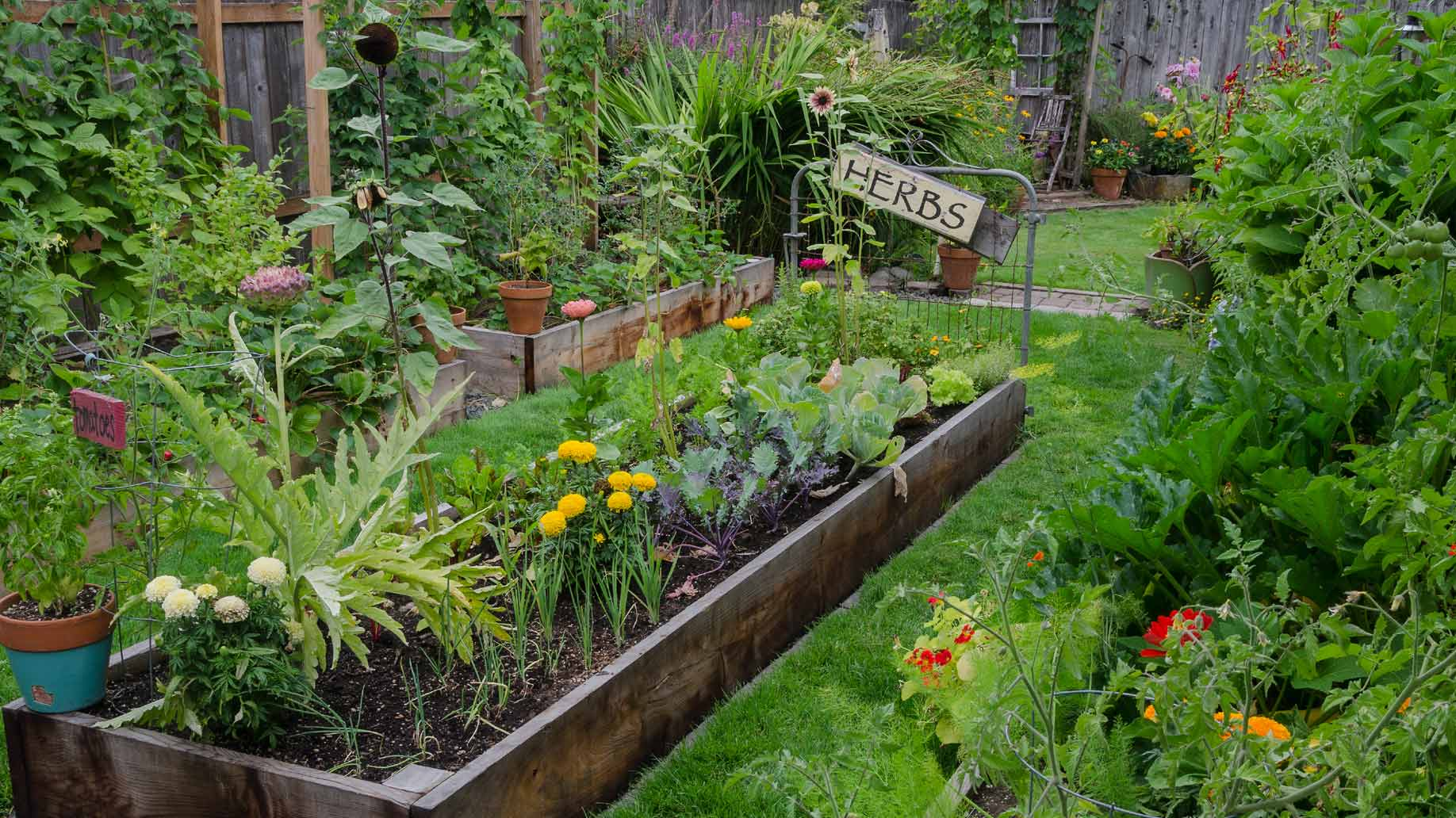 raised bed herb garden