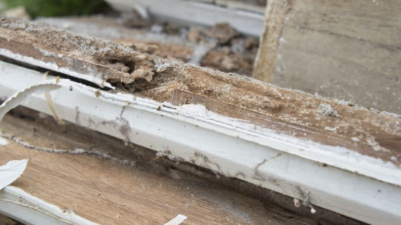 Termite Damage Problems