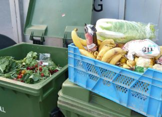 recovered discarded food freeganism
