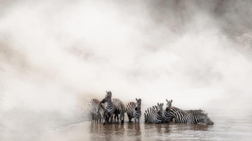 Tanzania Migration Of Zebras Drinking At Lake