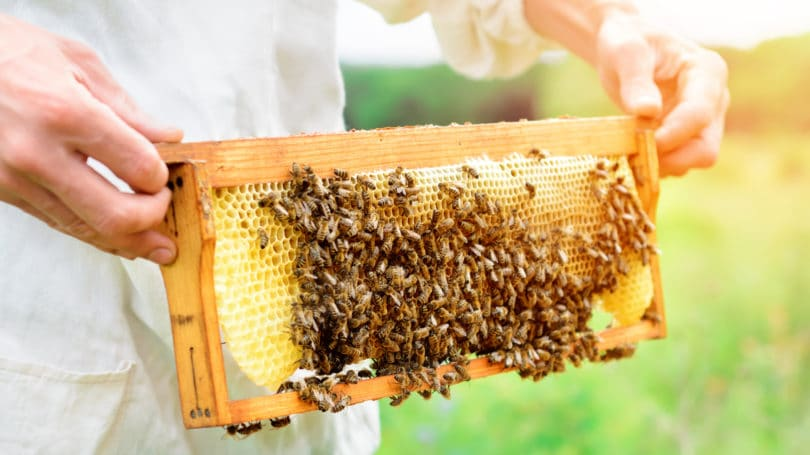 Beekeeper Honeycomb Bees Outdoors