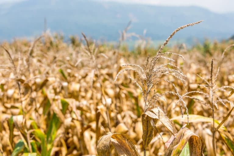 Why Food Prices Rising Droughts