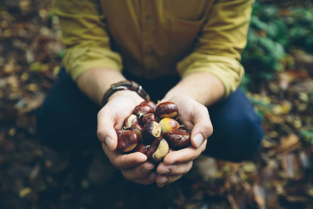 Ultimate Foraging Guide - Edible Wild Plants & Food, Benefits & Dangers