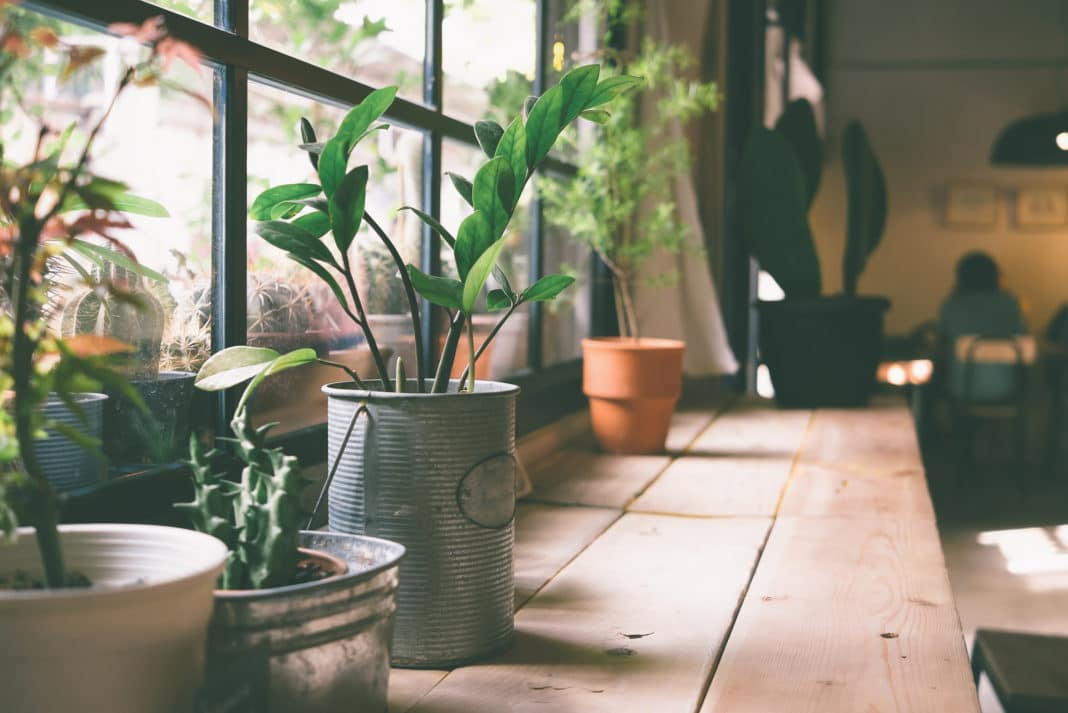 Plants Clean Purify Air Home