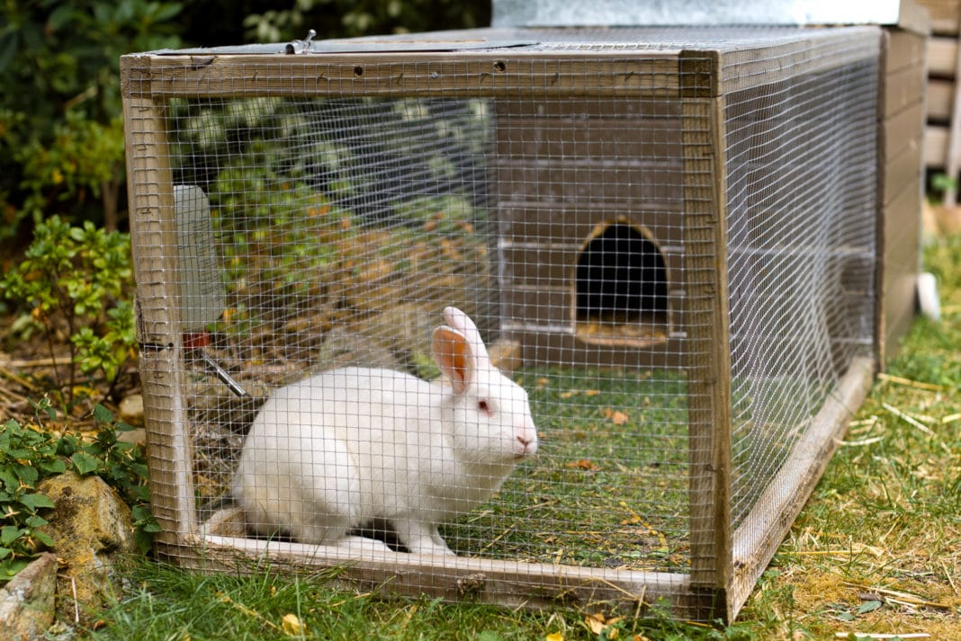 Raising Rabbits Meat Farming