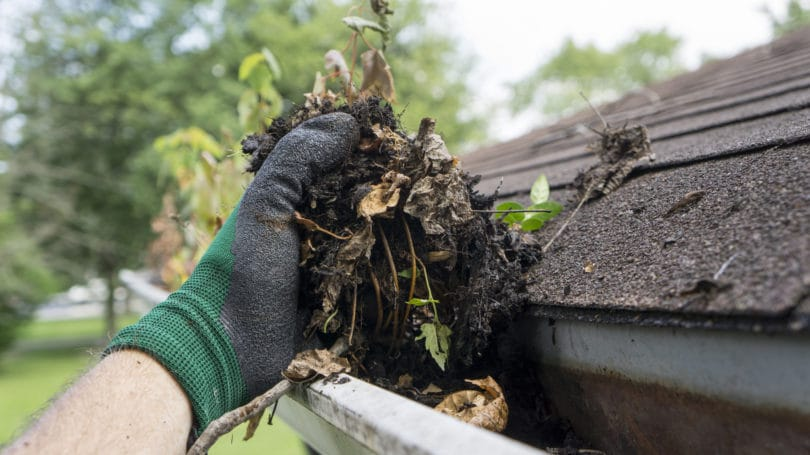 Roof Gutters Maintenance Cleaning Leaves Dirt Soil