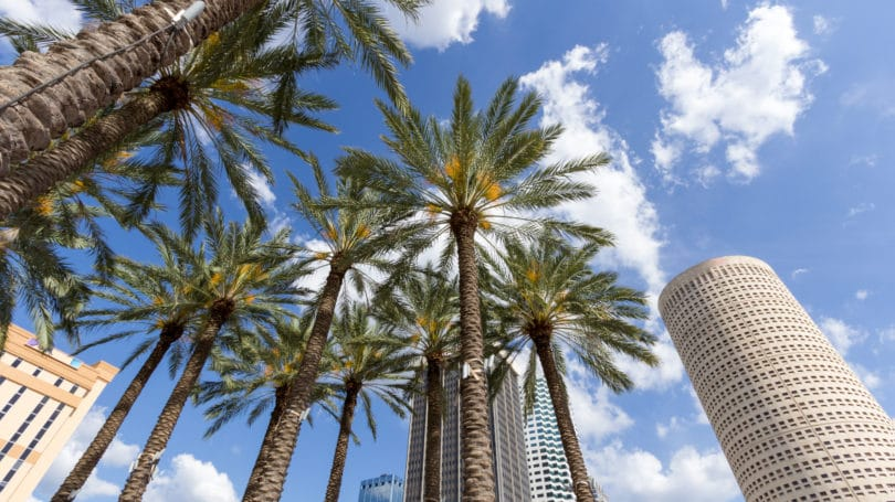 Tampa Florida Downtown Daytime Palm Trees