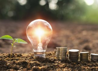 Lightbulb Planted Tree Sprouting Coins Investment