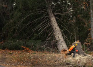 Lumberjack Logger Worker Protective Gear Cutting Tree