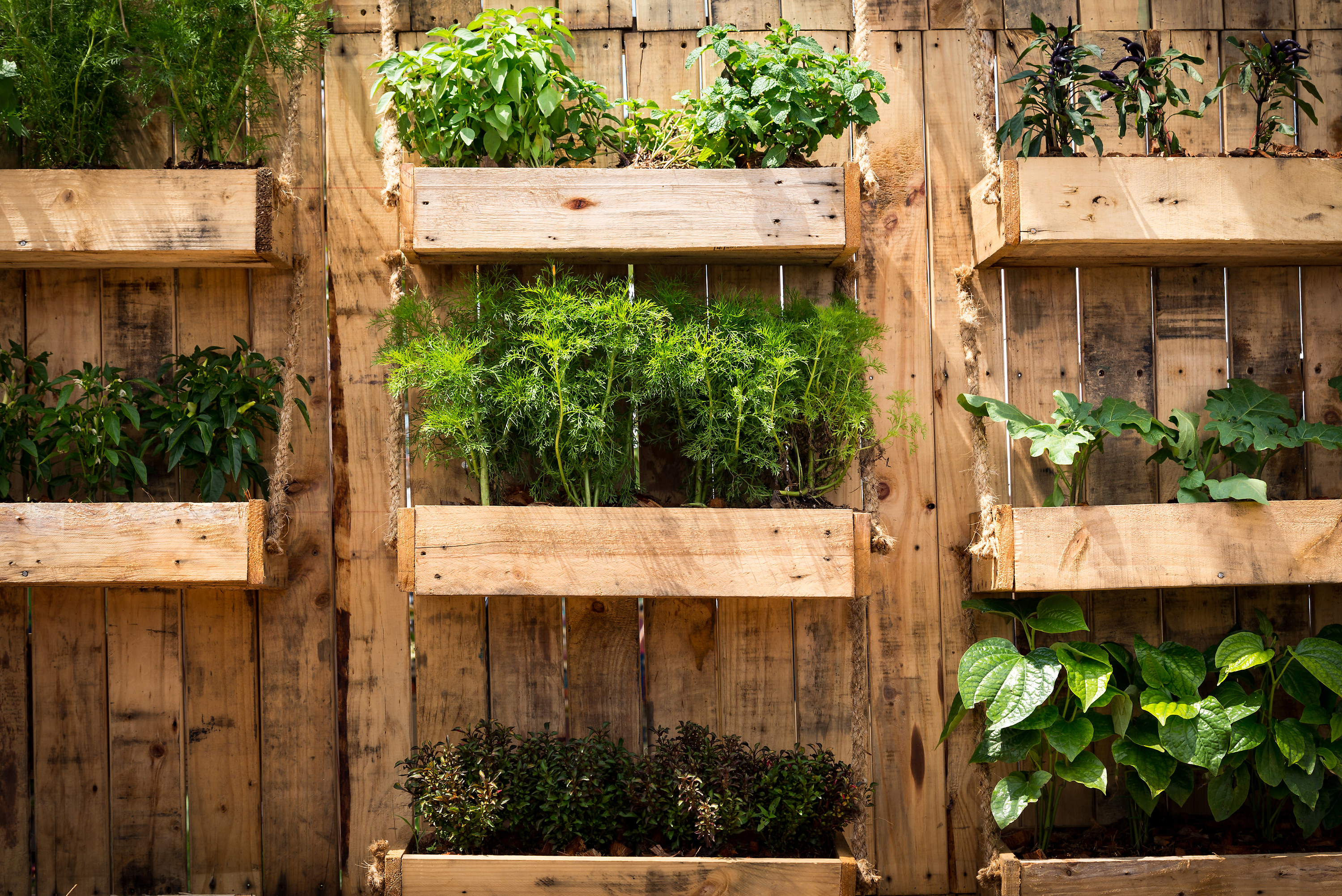 5 Home Vegetable Garden Ideas Types You Can Start On A Budget