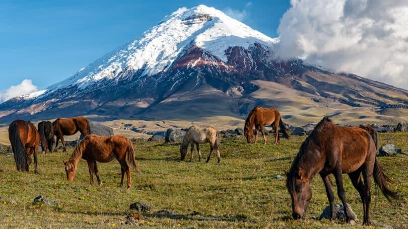 Ecuador Travel Destination