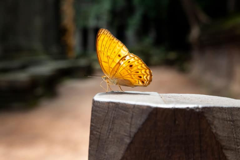 Yellow Butterfly Atop Stone