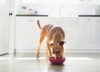 Dog Eating Food From Bowl Kitchen